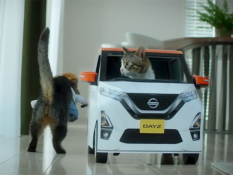 cat cafe nissan dayz mocha japan