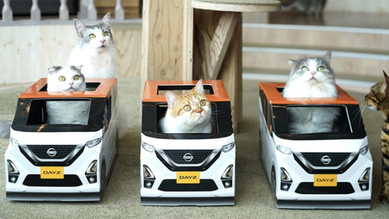 nissan days cat cafe advertise นิสสัน