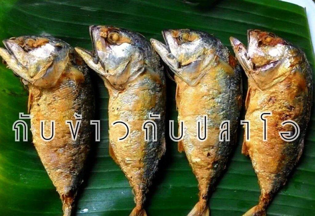 youtuber กับข้าวกับปลาโอ
