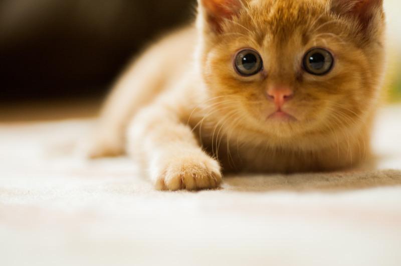 Pet Humanization