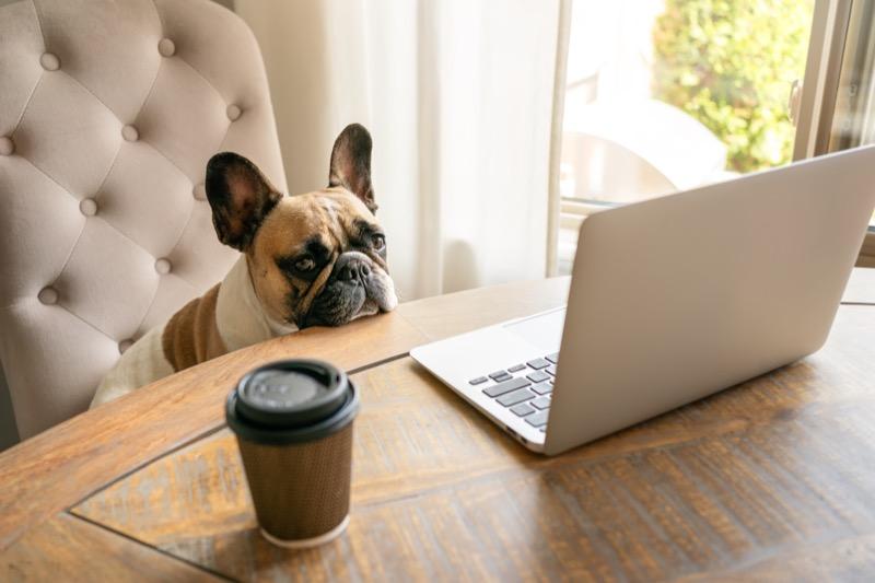 Pet Humanization_Dog Lover