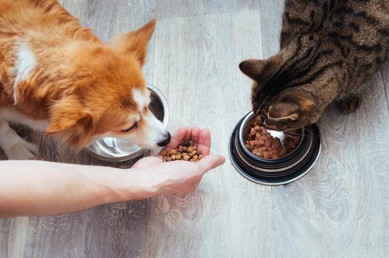 Pet Humanization_Pet Food